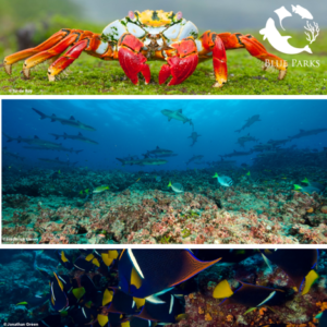 Reserva Marina de Galápagos gana prestigioso premio Blue Park